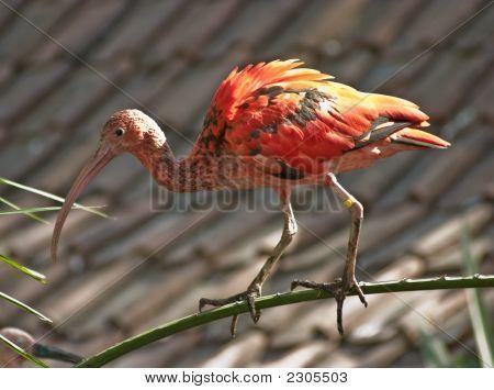 Medium Bird 1