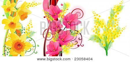 Three beautiful spring floral elements with tulips, daffodils and mimosa