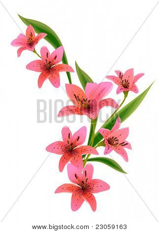Lily design element