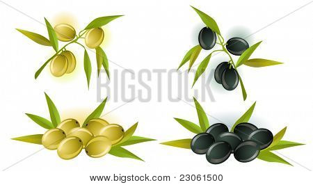 Collection of vector olives
