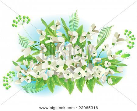 Bunch of snowdrops isolated on white background. Raster version. Vector version is in my gallery.