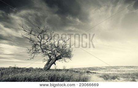 Lonely tree on sundown. Nature composition.