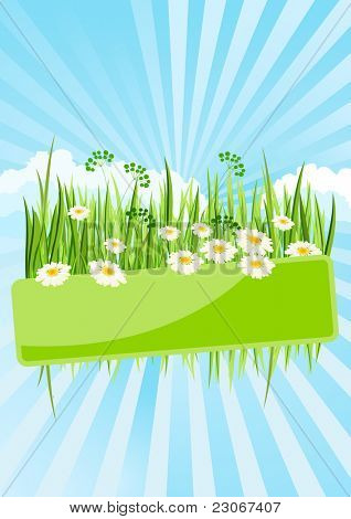 Green banner with green grass and daisies . Raster version. Vector version is in my gallery.