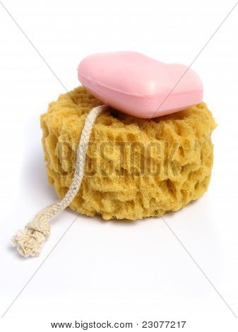 A natural wild sponge whit a pink soap