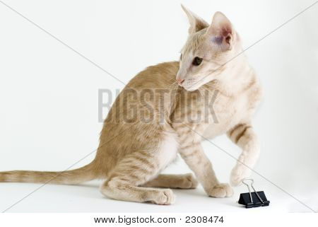 Cat And Binder Clip