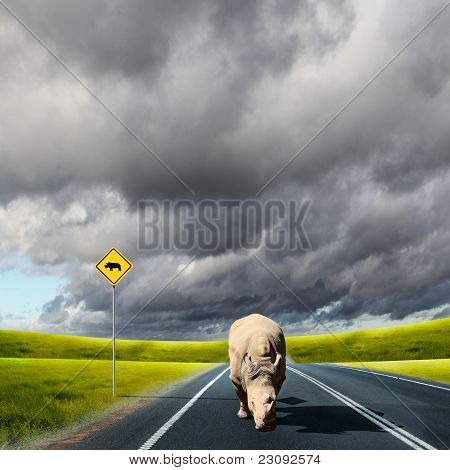 wild rhino wlaking on a road
