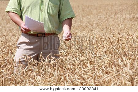 Man And Field Of Wheat