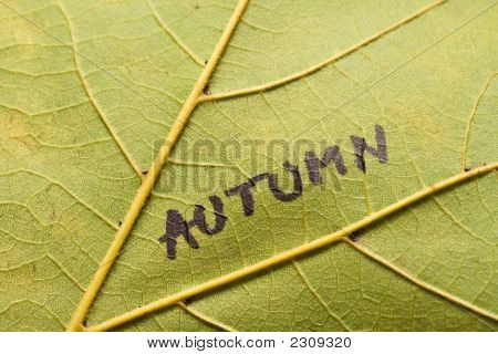 Autumn Word On Fall Leaf