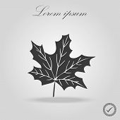 Icon Black Silhoutte Maple Leaf. Black Line Art Maple Leaf Isolated Background. Canada. Maple Leaf V poster