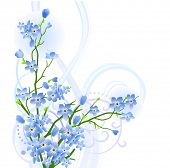pic of forget me not  - Forget - JPG