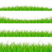 Grass Borders Set. Grass Plant Panorama. Grass Border Or Frame. Vector Illustration Isolated On Whit poster