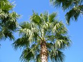 Palm Trees Blue Sky poster