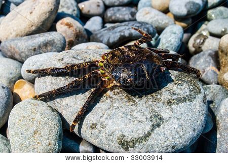 Crab On A Rock.