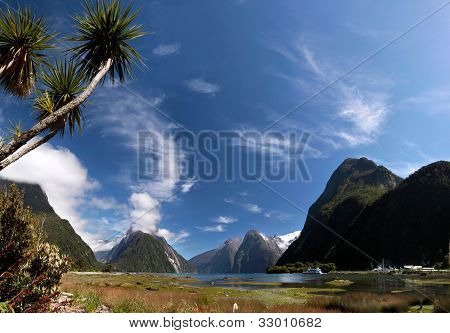 Palm Trees In The Milford Sound