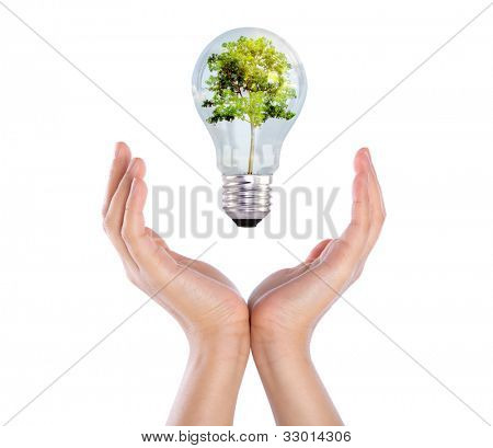 Light bulb over hand (green tree growing in a bulb)