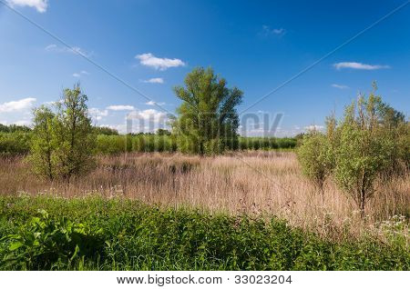 Picturesque Landscape In Springtime