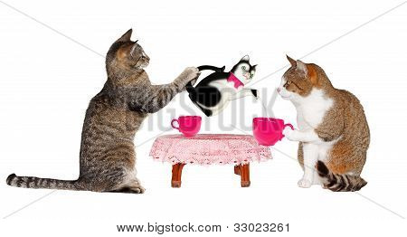 Two Cats Drinking Milk At Table