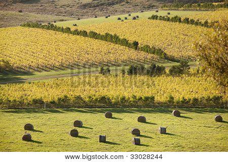 Oyster Bay Vineyards