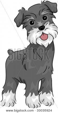 Illustration Featuring a Miniature Schnauzer