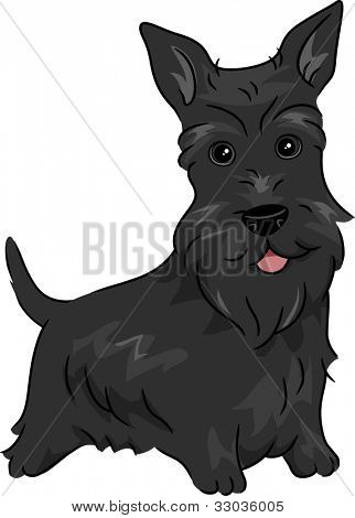 Illustration Featuring a Scottish Terrier