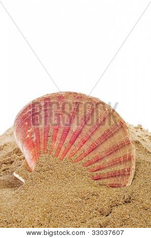 a sea shell on the sand
