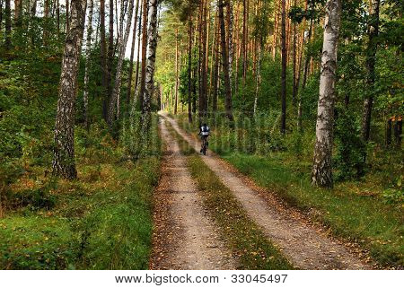 Man Biking In A Green Forest