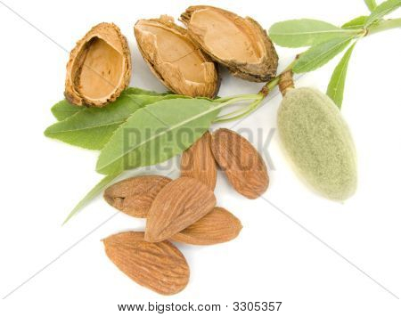 Young Almond