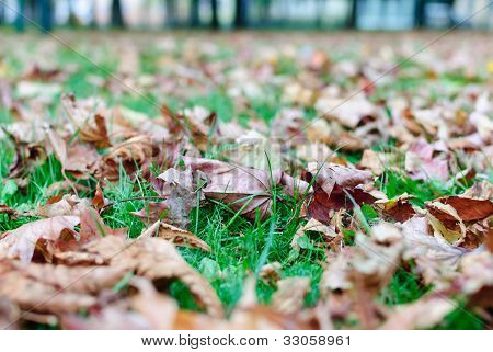 Fallen Leaves Lying On The Grass.