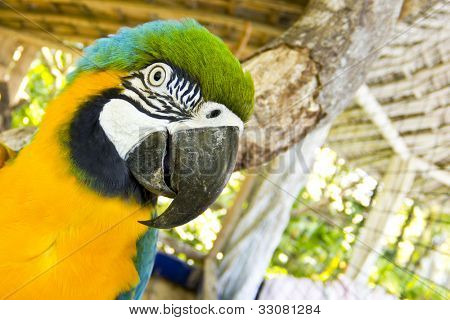 Animal theme: Blue and yellow macaw high detail