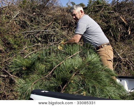 Brush Pile