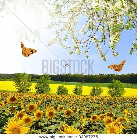 Summer sun over the sunflower field with butterflies