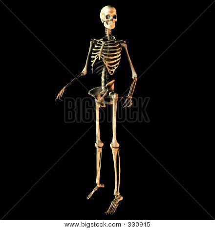 Bone 16
