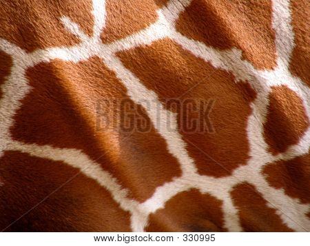 Patrón de la jirafa