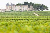 foto of chateau  - vineyard and Chateau d - JPG