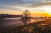 Autumn Tree Without Leaves In The Center Of The Frame At Dawn. Beautiful Autumn Dawn. poster