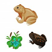 Vector Design Of Frog And Anuran Sign. Collection Of Frog And Animal Vector Icon For Stock. poster