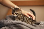 Cute Little Kitten On Bed. Caring For Pets, Pet From The Shelter For Animals. poster