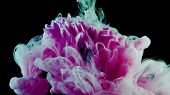 Flower Under Water And Splashes Of Colored Ink, Bright Colors. Creative And Color Mix, Abstract Swir poster