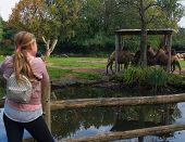 Girl Photographer Takes Pictures Of Animals In A Zoo. Camel In Zoo poster