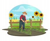 Farmer Hoeing And Weeding Soil With Garden Draw Hoe In Vegetable Garden Of Farm Vector Design. Beard poster
