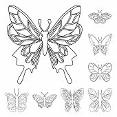 Vector Design Of Fly And Decorative Icon. Set Of Fly And Insect Stock Symbol For Web. poster