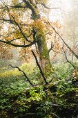 Green Forest In Nature In Autumn. Old Tree In Forest In Autumn. Nature. Rain In Forest. Natural Envi poster