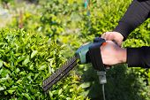 stock photo of trimmers  - Young man mowing the grass  - JPG