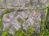 Bright Green Moss On A Gray Brick Wall. Background Brick Wall, Green Moss On Grunge Texture, Backgro poster