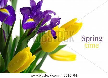 Spring flowers - yellow tulips and blue irises