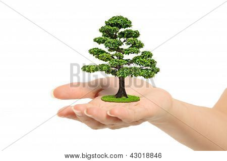 Tree on hand isolated