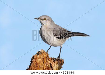 Mockingbird On A Stump