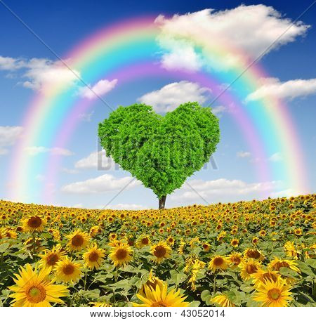 rainbow above the sunflower field with  tree from the shape heart