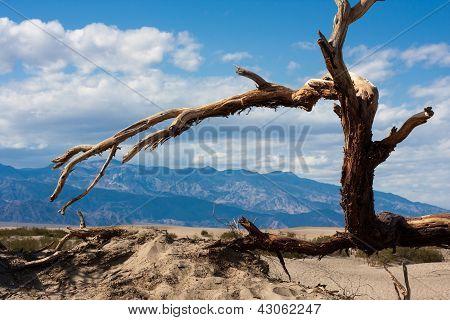 Baum im Death valley
