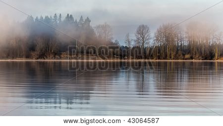 Misty Forest Across River